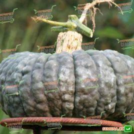 Марина ди Кьожжа семена тыквы мускатной средней 120дн. 10кг (Hortus)