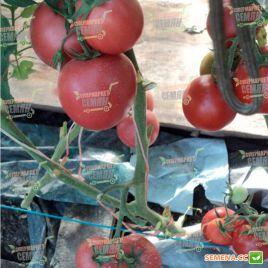 Демиросса F1 (Димероза F1) семена томата индет. ультрараннего 102-105 дн. окр. 200-220г роз. (Enza Zaden)