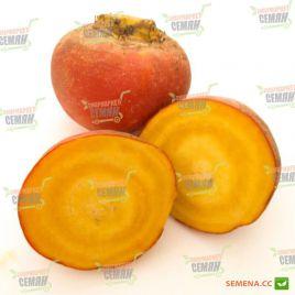 Елоу Бит семена свеклы столовой желтой 110-120 дн. окр. (Wing Seed)