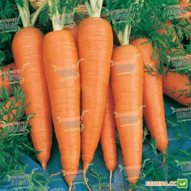 Кардила семена моркови Флакке поздней 120-130 дн.(Semo)