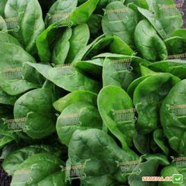 Клиппер F1 семена шпината (Sakata)