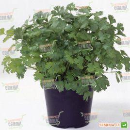 Марино Organic семена кориандра (Enza Zaden/Vitalis)