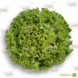 Патишн семена салата тип Батавия зел. дражированные (Rijk Zwaan)