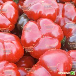 Топаз F1 семена перца сладкого тип Ротунда/Гогошара среднего окр. 150-190гр. 4-х камер. 6-7мм зел./красн. (Wing Seed)