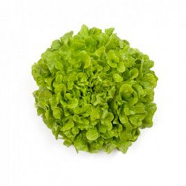 Кирибати семена салата тип Дуболистный дражированные (Rijk Zwaan)
