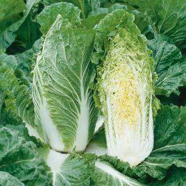 Анако F1 семена капусты пекинской средней 70-75 дн. 1,5-2 кг (NongWooBio)