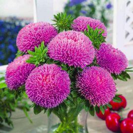 Балун розовый семена астры на срез однол. (Satimex ПН)