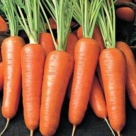 Бентли F1 семена моркови Нантес средней 120 дн. (Agri Saaten)