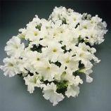 Суперкаскад F1 белый семена петунии грандифлора (Pan American)
