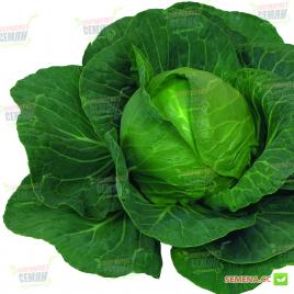 Элиза F1 (Елиза F1) семена капусты б/к ультраранней 43-48 дн. 0,6-1,2 кг (Sakata)