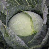 Артек F1 семена капусты б/к среднепоздней 95-105 дн 2-3кг окр. (Lucky Seed) 2по цене1