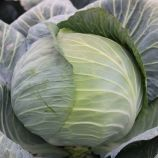 Гарантия F1 семена капусты б/к поздней 120-130 дн. 3-3,5 кг окр. (Lucky Seed)