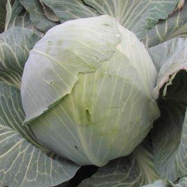 Кентавр F1 семена капусты б/к поздней 130-145 дн. 2,5-3 кг окр-прип. (Lucky Seed)