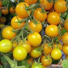 Голдвин F1 семена томата индет. черри раннего 65-70 дн. окр. 20-25 гр. желт. (Clause)