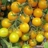 Голдвин F1 семена томата индет. черри 65-70 дн. 20-25г желтый (Clause)