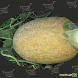 Ананас семена дыни средней 70-75 дн. 1,8-2,5 кг овал. оран./бел. (Agri Saaten)