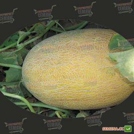 Ананас семена дыни тип Ананас средней 80-90 дн. 1,8-2,5 кг овал. оран./бел. (Agri Saaten)