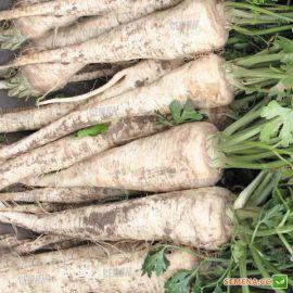 Белая жемчужина семена пастернака (Agri Saaten)