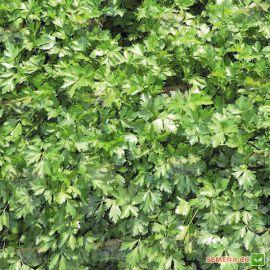 Гиганте де Италия семена петрушки листовой (Agri Saaten)