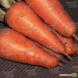 Катрин семена моркови Шантане среднепоздней 120-125 дн. (Agri Saaten)