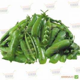 Макси Голд семена гороха овощного раннего 65 дн (Agri Saaten)