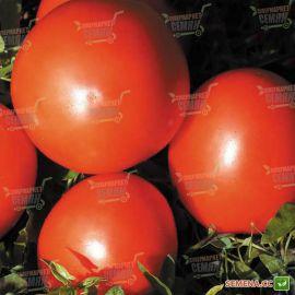 Мараиса F1 семена томата дет. 90-95 гр. (Agri Saaten) НЕТ ТОВАРА