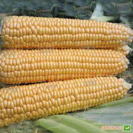 Свит Наггет F1 семена кукурузы суперсладкой Sh2 69-72дн. 22см 16р. (Agri Saaten)