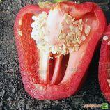 2605 F1 семена перца сладкого раннего зел.красн. (Agri Saaten)
