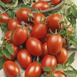 Блумко F1 семена томата индет. среднего 100-110 дн. слив. 50-80 гр. (Semo)