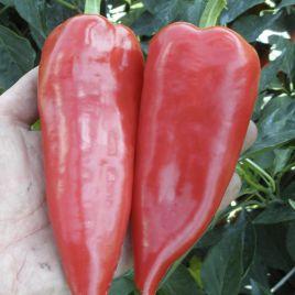 Драки F1 семена перца острого (Semo)