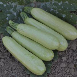 Теренум F1 семена кабачка ультрараннего 40-42 дн. крем. (Spark Seeds)