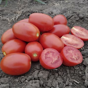 9905 F1 семена томата дет. среднеспелый красн. (Heinz/Lark Seeds)