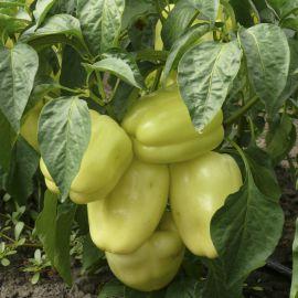 Диамант F1 семена перца сладк. ультрараннего 40-45 дн. (Lark Seed)