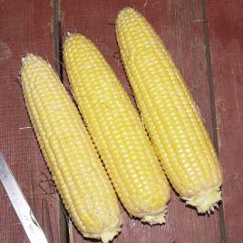 Свит Парадайз F1 семена кукурузы суперсладкой ранней Sh2 72-74дн 18-20см 16-18р. (Lark Seeds)