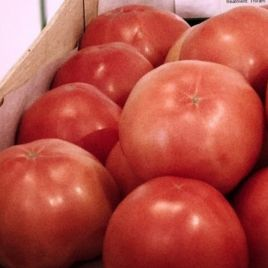 ТС 02-0082 F1 семена томата индет. розового 200-220 г (Solare Sementi)