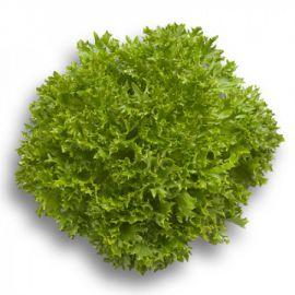 Экспертайз семена салата тип Саланова дражированные (Rijk Zwaan)