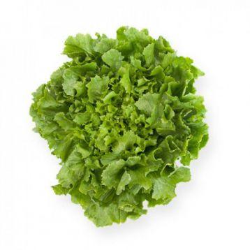 Кейтел семена салата тип Эндивий дражированные (Rijk Zwaan)