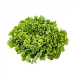 Анкони семена салата тип Эндивий дражированные (Rijk Zwaan)