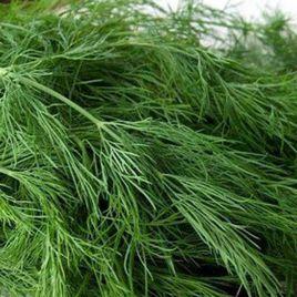 Грин Сливс Organic семена укропа (Enza Zaden/Vitalis)