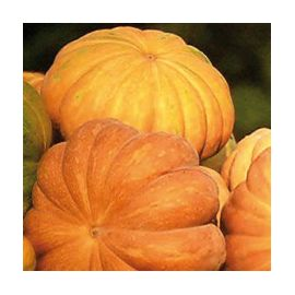 Мускат де Прованс F1 Organic семена тыквы мускатной среднепоздней 5-8 кг (Enza Zaden/Vitalis)