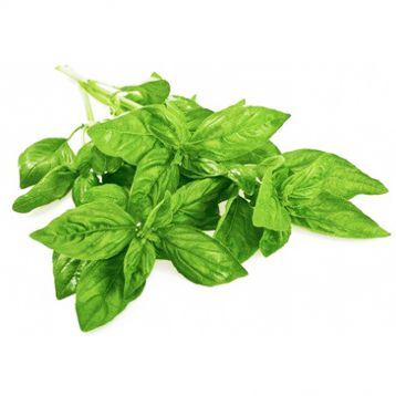 Кира семена базилика тип Геновезе темно-зел. (Enza Zaden)