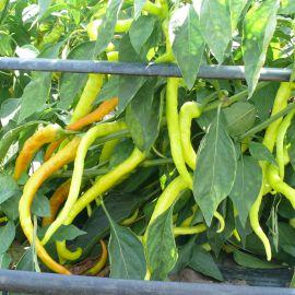 Спираль F1 семена перца горького раннего удлинен. 45-50 гр. 25х3 см сал./красн. (Lark Seed)