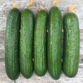 Базис F1 семена огурца партенокарп. раннего 45 дн. 20-22 см (Lark Seeds)