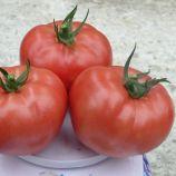 1625 F1 семена томата индет. раннего 95 дн. 250-300 гр. роз. (Lark Seeds)