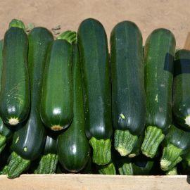 Базальт F1 семена кабачка 43 дн. темно-зел. (Lark Seeds)