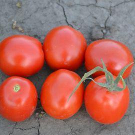 Грандо F1 семена томата дет. раннего 95 дн. слив. 70-80г (Lark Seeds)