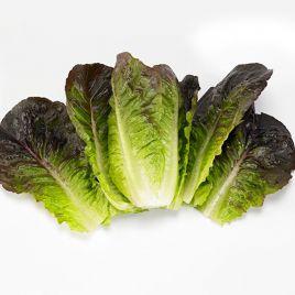 Мунред Organic семена салата тип Ромэн (Enza Zaden/Vitalis)
