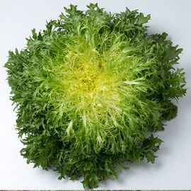 Бенефайн Organic семена салата тип Эндивий (Enza Zaden/Vitalis)