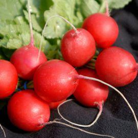 Виенна F1 (2,75-3,00) семена редиса раннего (Enza Zaden)