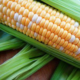 Мраморная F1 семена кукурузы суперсладкой Sh2 среднеспелый 77-79 дн. 22 см (Мнагор)